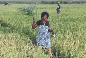 BURKINA FASO : Au-delà de la production, il faut commercialiser au juste prix !