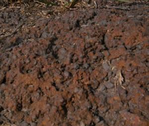 Photo N°4 : Concrétion ferrugineuse [Ahlihankpé] ou minerai de fer à Tado