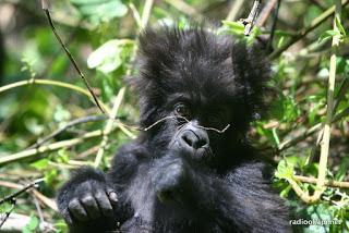 Nord-Kivu : Malgré le danger, le parc national des Virunga célèbre son 90e anniversaire