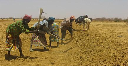 Selon l'ONU, 1/4 des Nigériens sont menacés par l'insécurité alimentaire