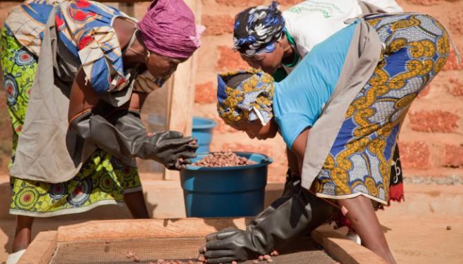 Production du beurre de karité: Un art ancestral maîtrisé par les Femmes Africaines