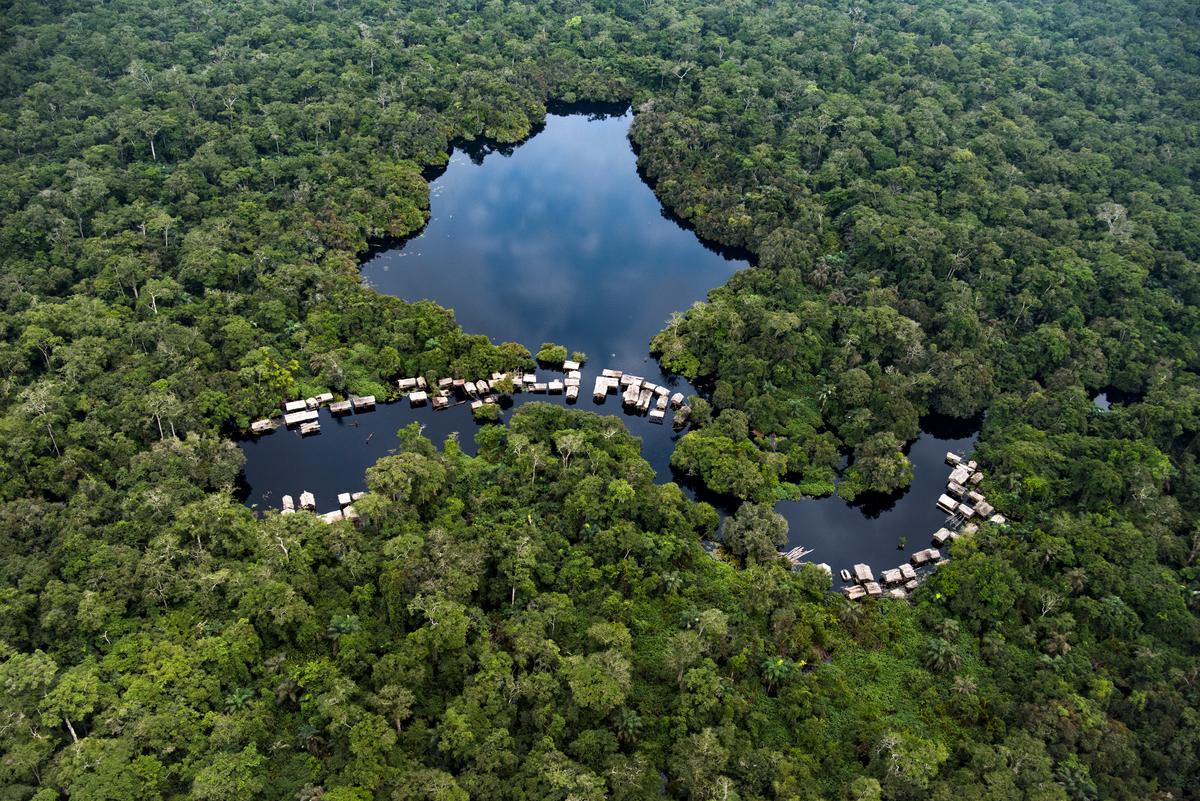 RDC: deux compagnies chinoises se partagent 650 000 ha de forêt