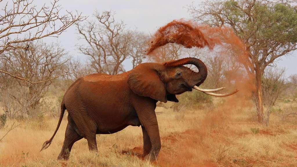La faune africaine menacée de disparition