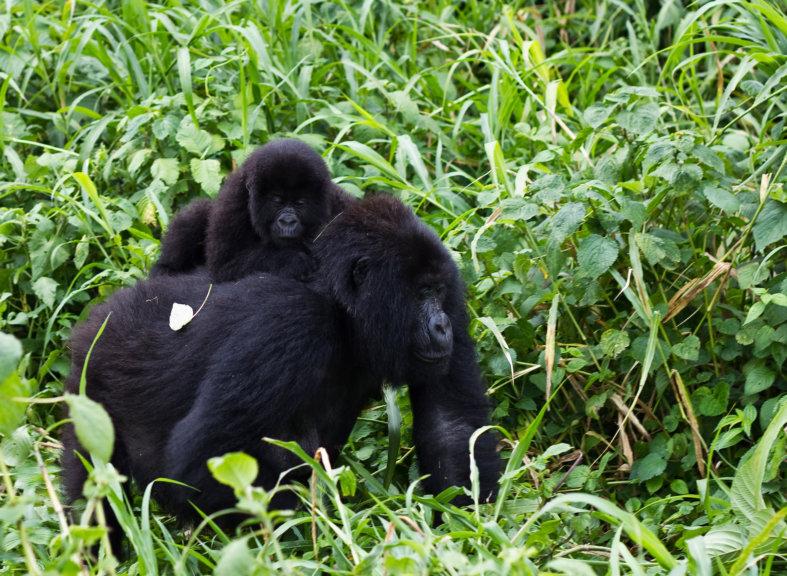RDC: un projet d'exploitation pétrolière menace deux parcs naturels protégés