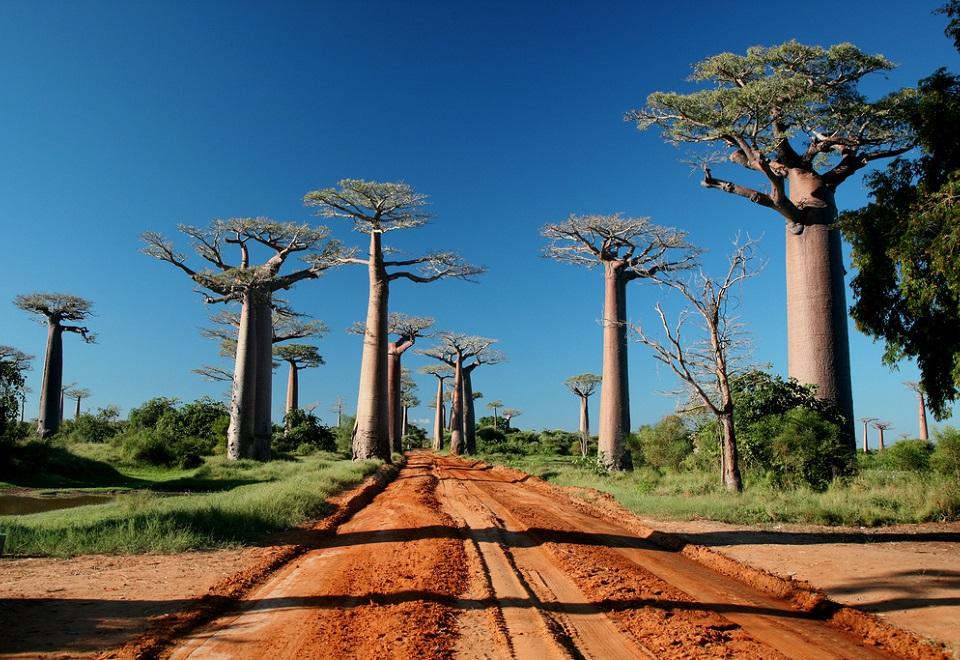 Allee des Baobabs, Madagascar