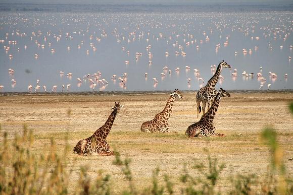 La Nature africaine dans toute sa splendeur
