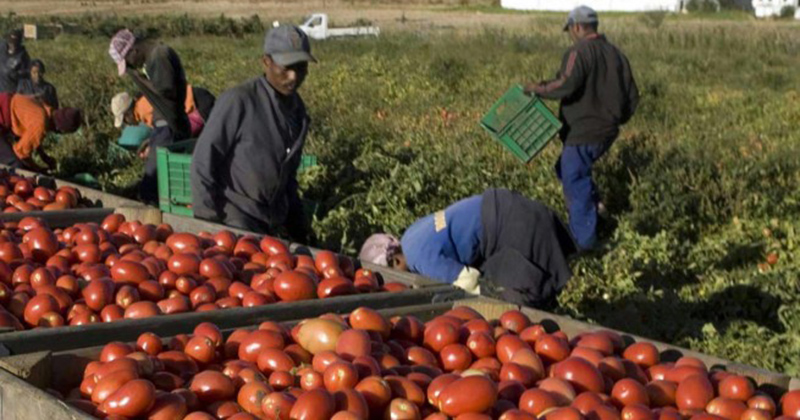 Esclavage moderne : les Africains cueilleurs de tomates en Italie