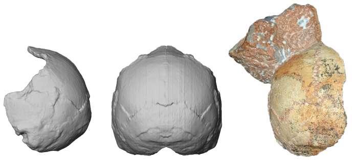 Un crâne vieux de 210 000 ans retrouvé en Europe