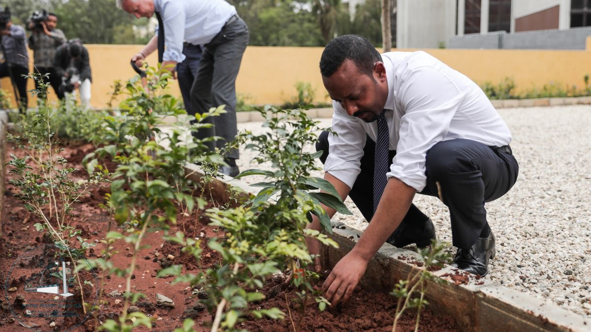 L'Ethiopie plante 350 millions d'arbres en une journée